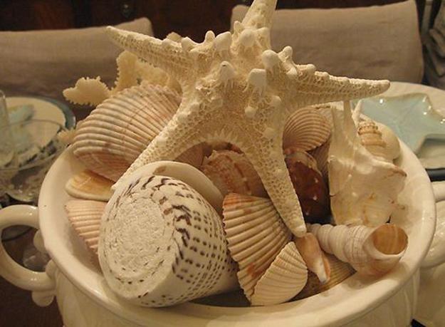bb7545f34d7424dc73eb527d9a803c33--drop-cloths-seashell-crafts